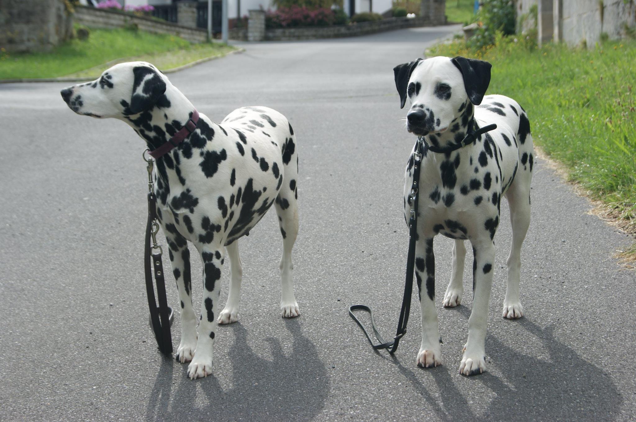 Lila (links) und Wibke (rechts)