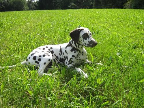 Quintilia im Gras