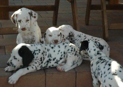 Piccolo und seine Geschwister