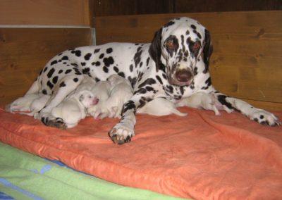 Bild 3 von Quintilia mit ihrem Nachwuchs am 3ten Tag