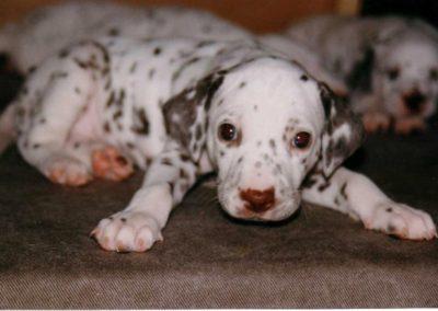 Dayka - Dieser kleine Schatz durfte dann in unserer Familie bleiben.